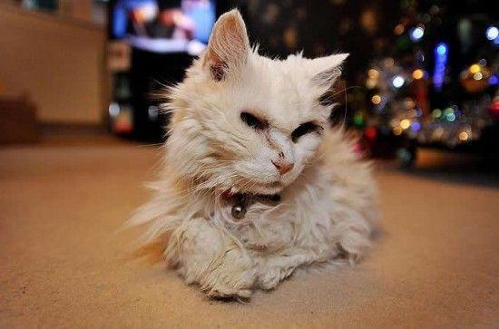 Самый старый кот в мире - Блэки