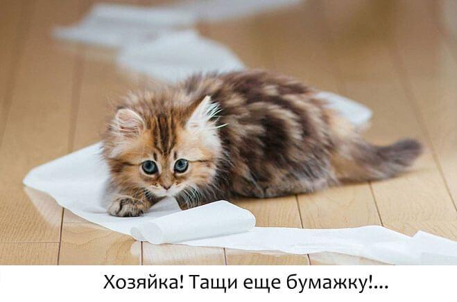 У котенка понос (диарея)