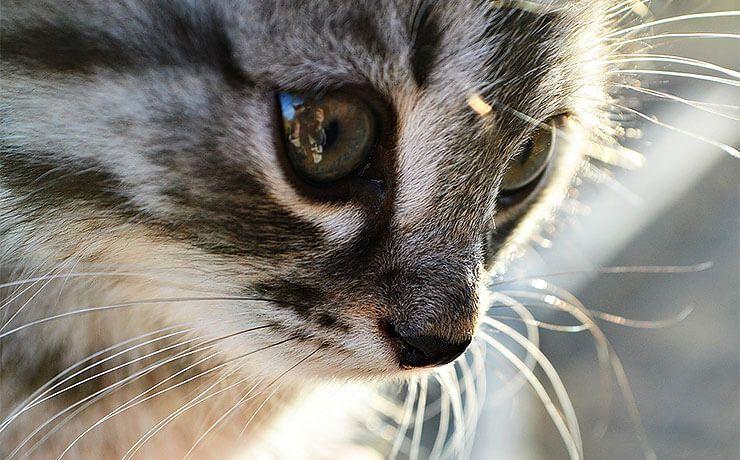 Как подобрать имя для котенка?