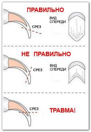 Как правильно обрезать когти кошке