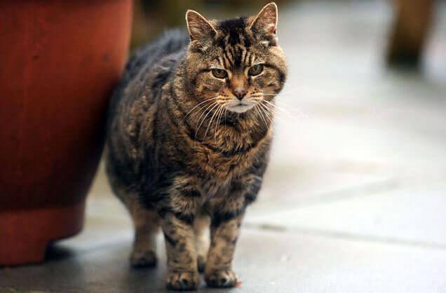 Старая кошка Люси