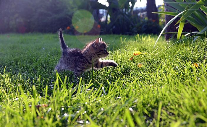 Сколько лет живут коты и кошки