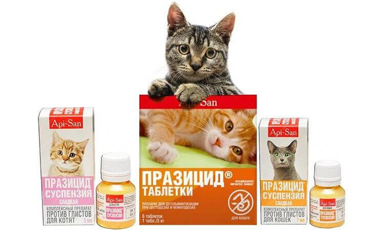 Таблетки от глистов у кошек