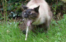 Кота рвет белой пеной