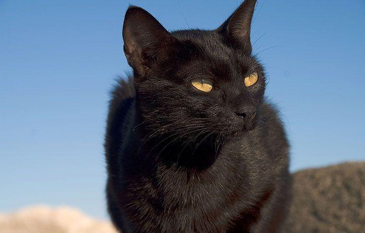 Как назвать чрного котнка мальчика