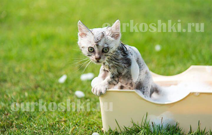 как помыть котенка первый раз