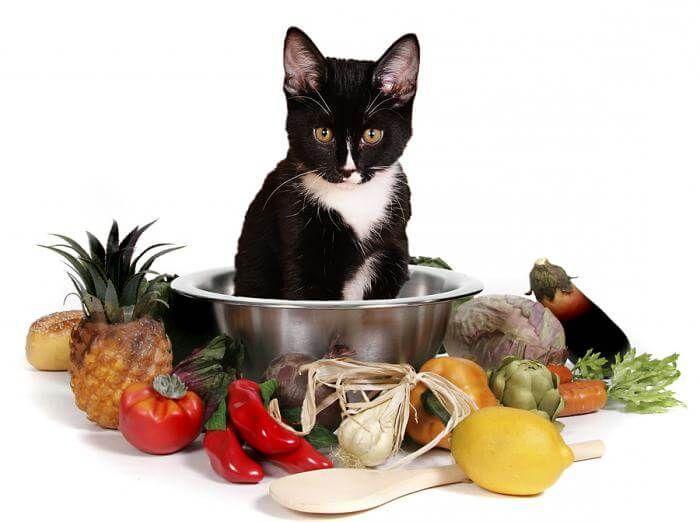 Правильное питание кошек - как лечить понос у кошки