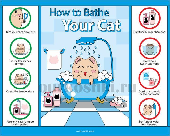 Основные правила купания котов