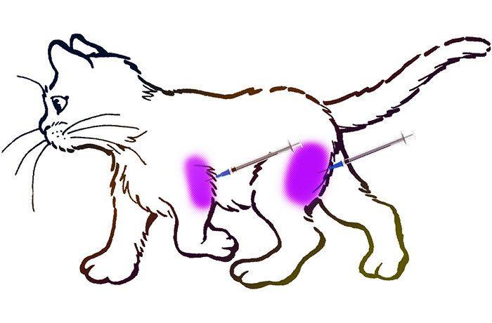 Видео как правильно сделать внутримышечный укол коту