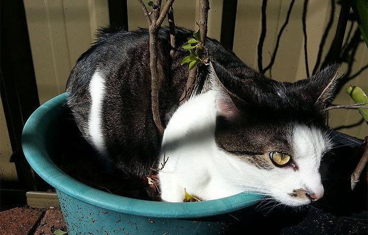 Кошка гадит где попало