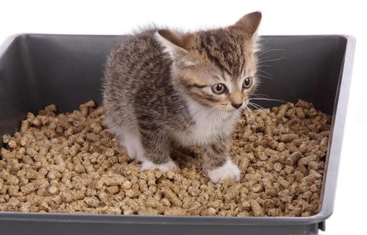 Почему котенок не хочет ходить в туалет