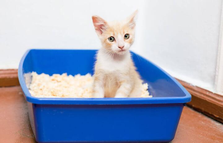 Приучение кошки к лотку