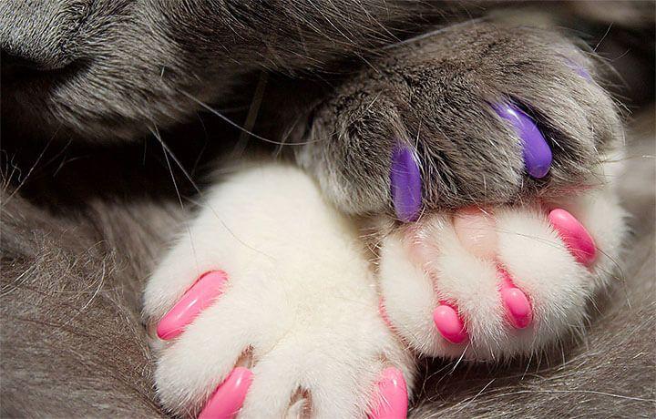Накладки на когти для кошек