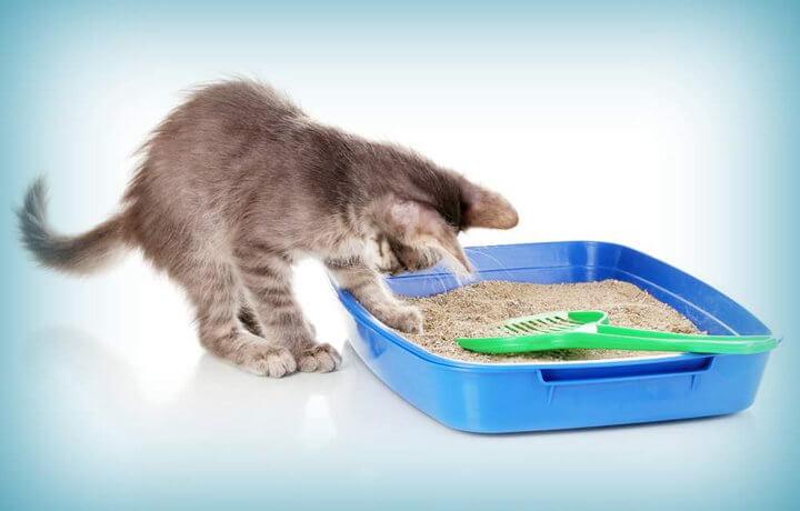 Коту важно, чтобы наполнитель в лотке был чистый