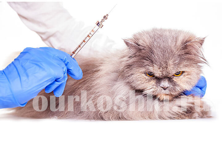 Какие нужно делать прививки котенку