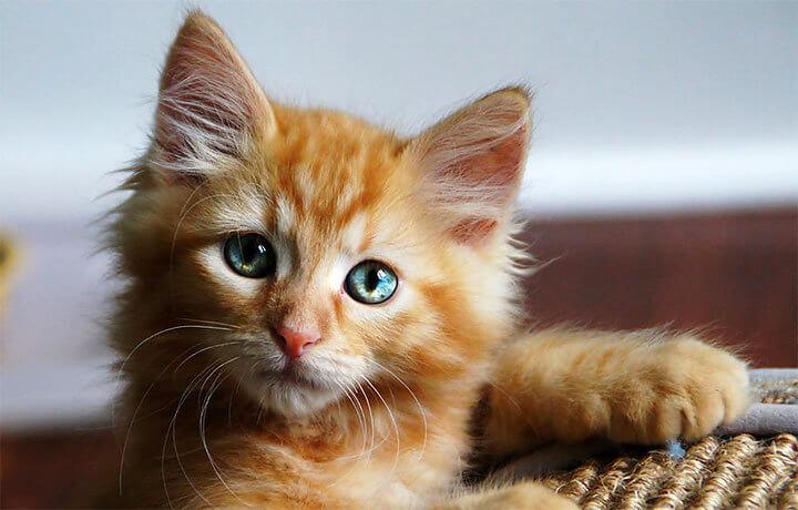 Как назвать рыжего кота или кошку