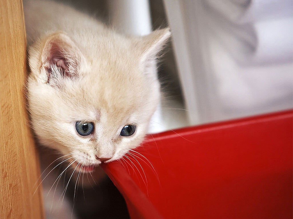 Картинки по запросу витамины в рацион кошке или коту