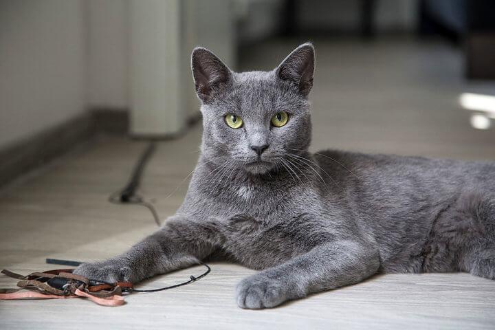 Клички для серых кошек девочек