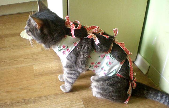 все о стерилизации кошек