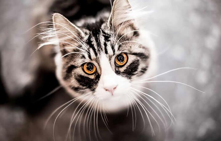 Чувствительное осязание кошек