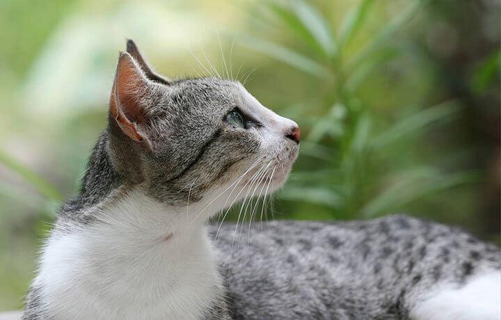 Перхоть на спине у кота