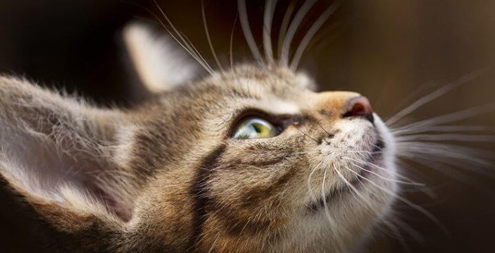 Усы кошек - интересные факты о кошках