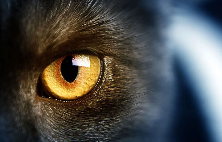 гноятся глаза у котенка