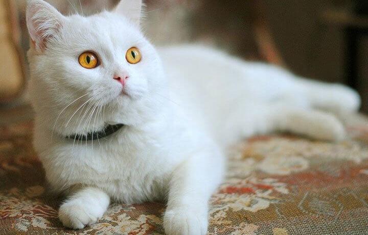 выбираем магическую кличку для белого кота