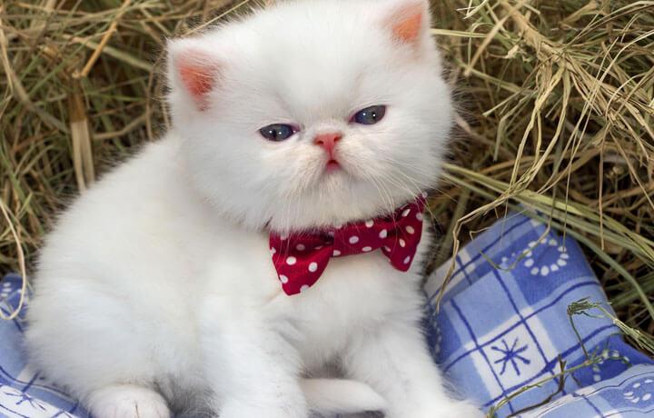 Как назвать белого кота или кошку?