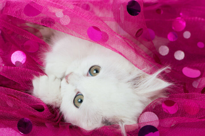 Белый котенок - подбираем клички