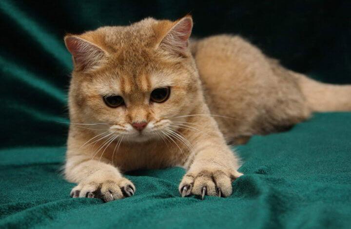 Почему кошка все царапает