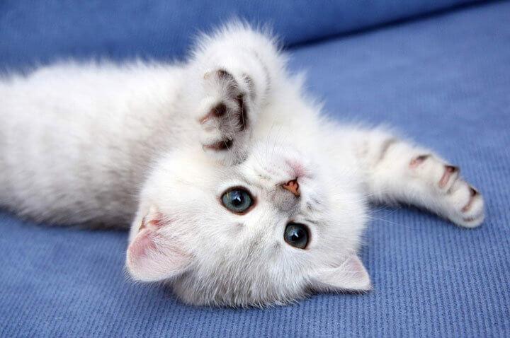 Как купить плюшевого котика
