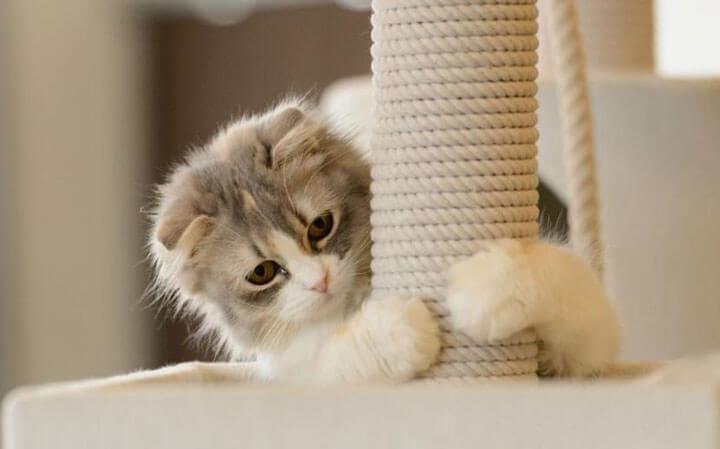 приучаем кошку к когтеточке