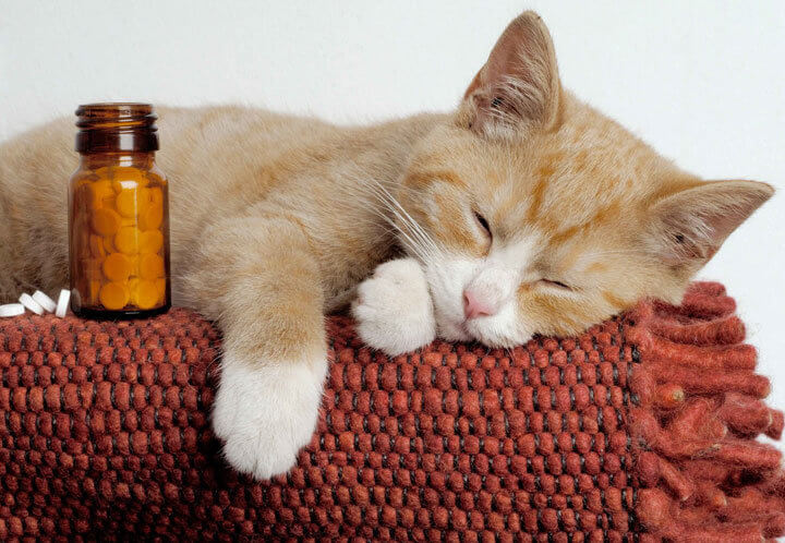 Лечение котенка таблетками