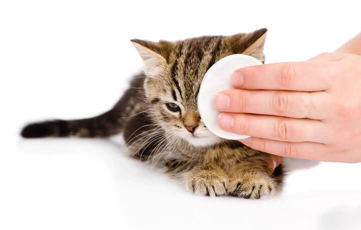 Травмирование века кота