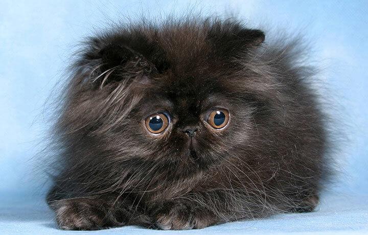 как промывать глаза у котенка