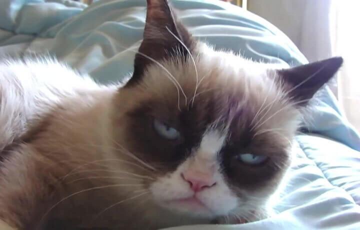 Антикольвусанты для кошек
