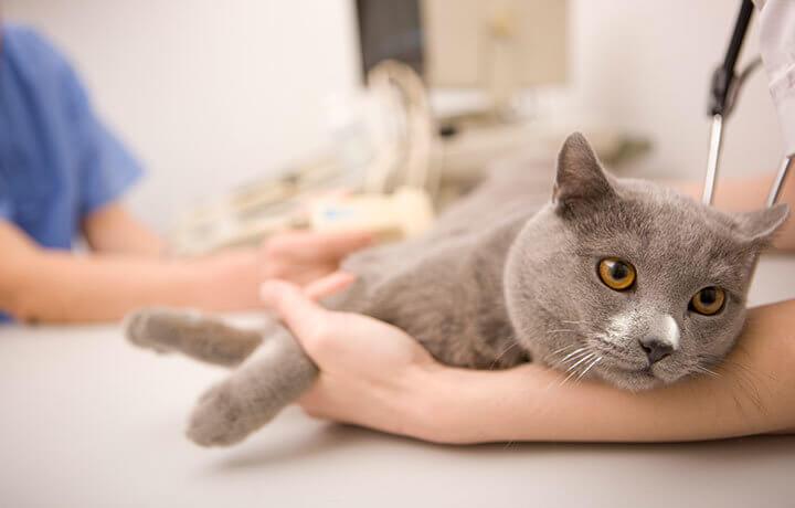 Что такое чипирование животных
