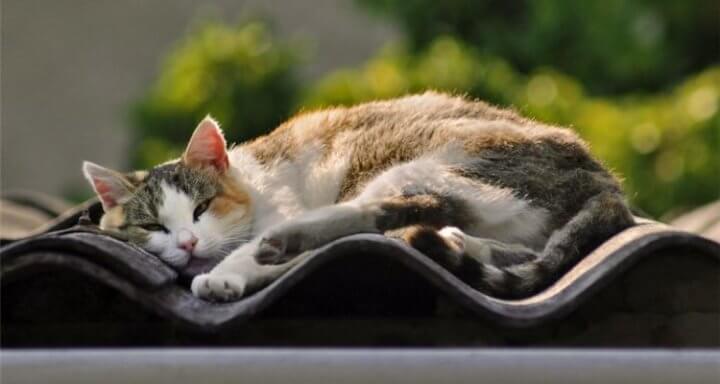 Седативные для кошек