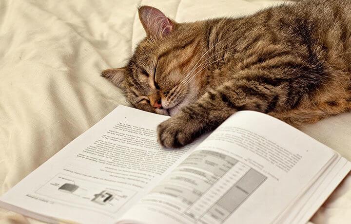 Транквилизаторы для котов