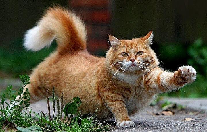 Запаховые метки кота