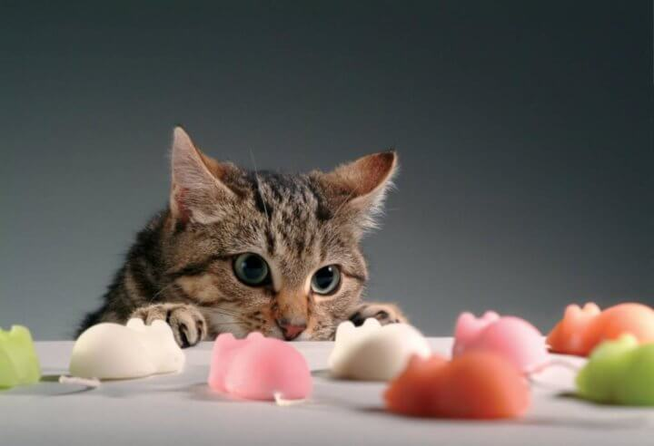 Диета для кошек