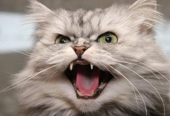 Почему выпадают зубы у кошек