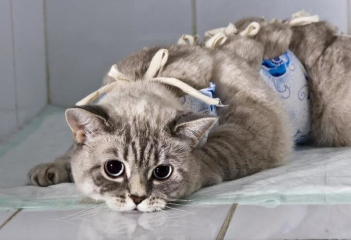 Послеоперационный уход за котом