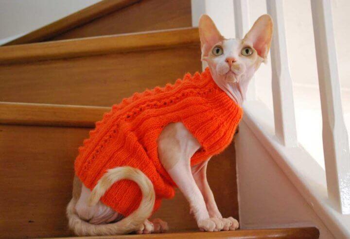 Порода кошки Сфинкс
