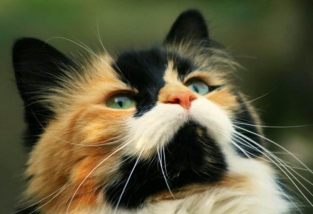 Выбор имени для кошки