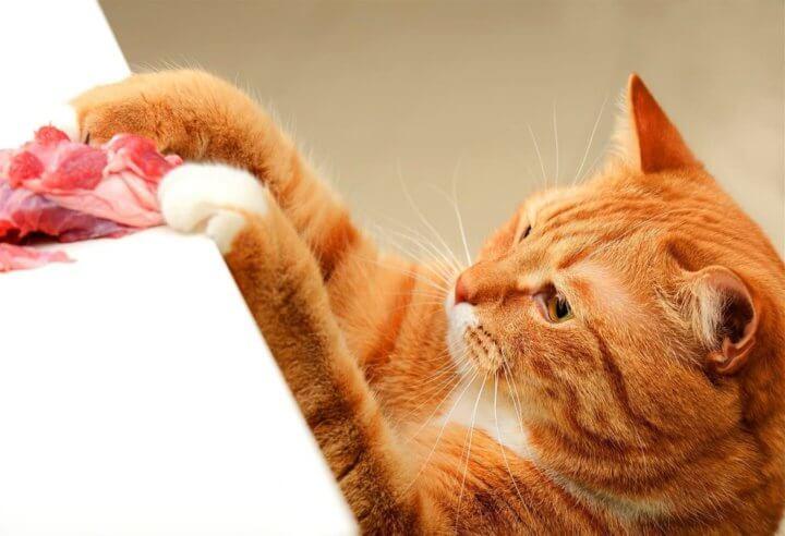 Чем нельзя кормить кота кастрата