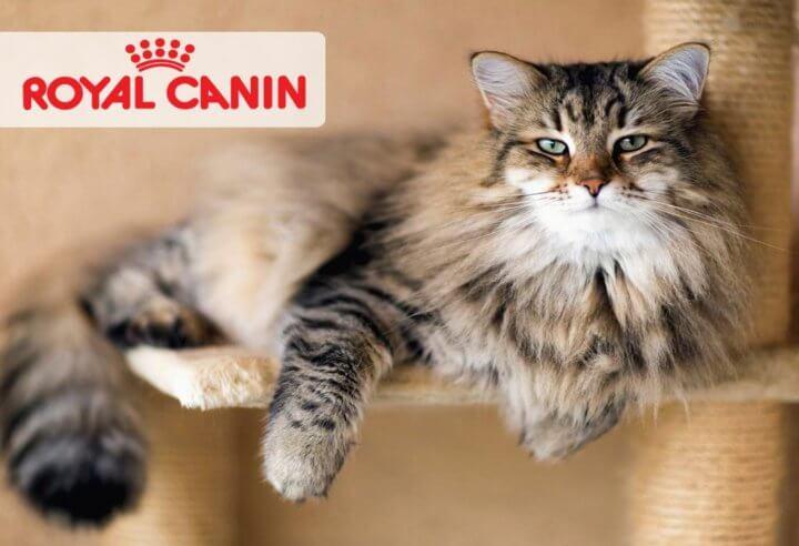 Корм Роял Канин для кошки