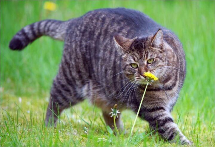 Послеоперационное ожирение кота