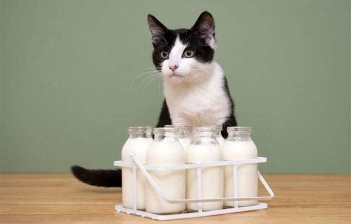 можно ли котятам давать молоко